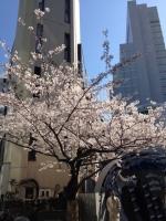 4/4桜1.jpg